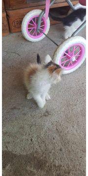 Püppi Katze aus dem Tierschutz