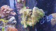 verschiedene Korallen von weich bis
