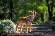 Hana sucht ihre Menschen Tierschutzhund