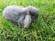 Kaninchen Babys vom