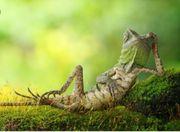 nehme Reptilien aller