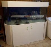 Grosses Aquarium zu Verschenken