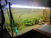 Aquarium 160 Liter LED Beleuchtung