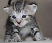 suche eine Babykatzen