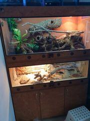 Terrarium mit Tieren