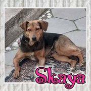 Wer gibt Skaya eine Chance