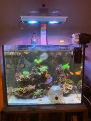 Löse mein Meerwasseraquarium auf