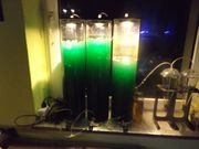 5 Liter Phytoplankton Synechococcus