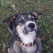 Robin sucht Menschen mit Hundeverstand