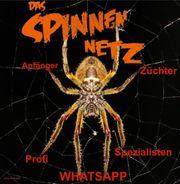 Neue Whatsappgruppe Das Spinnennetz sucht