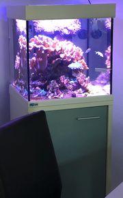 Meerwasseraquarium 165 Liter