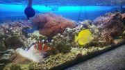 Meerwasser Korallen Fische Lebensgestein