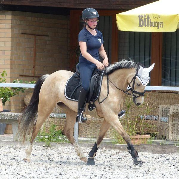 Traumpony - Dressurpony - Turnierpony - » Pferde