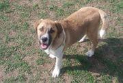 Wer gibt Shacky Tierschutzhund ein