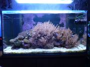 Salzwasser-Aquarium