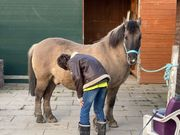 2 Ponys suchen Beschäftigung
