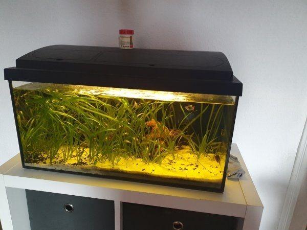Aquarium 60 er Becken