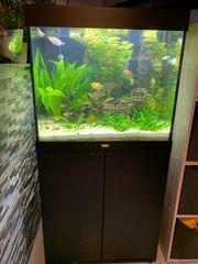 Aquarium Lido 200 von Juwel