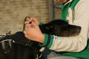 Francisca ältere anhängliche Hundedame sucht