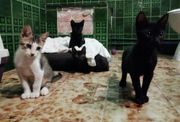 Katzenkinder suchen ein