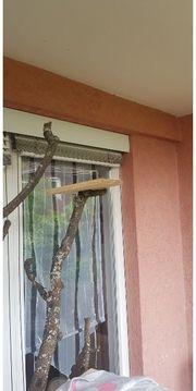 katzenbaum Natur