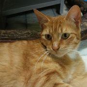 Katzenbub Chilli sitzt auf gepacktem