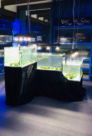 3-Etagen Aquarium