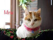 Mina süße Tierschutzkatze