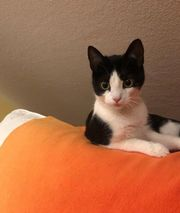 reserviert Katze Venus sucht ein