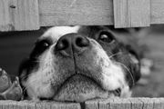 Scheune Stall Gebäude für Hundepension