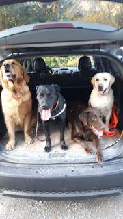 Hundesitter Tagesbetreuung