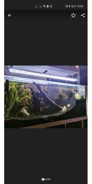 240l Aquarium