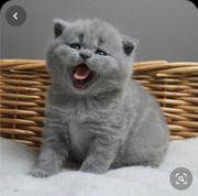 BKH Katzenbaby gesucht