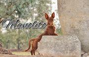 Starten Sie mit Manolito in