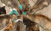Sachspenden für Tierschutz gesucht