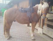 Reitbeteiligung (Pferd sucht