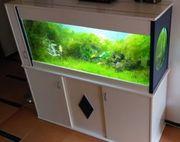 Aquarium ca 222 L Aquascaping