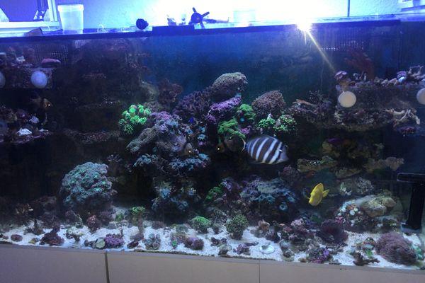 Meerwasser Aquarium 120x70x60 komplett