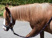 Ponys suchen Pflegebeteiligung