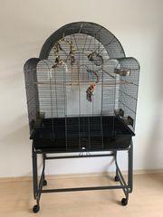 Vogelkäfig mit Innenausstattung