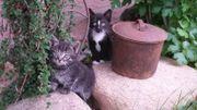 Katzen Junge kleine