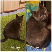 Micky und Daisy suchen ein