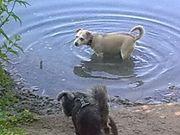 Liebevolle Hundebetreung geboten