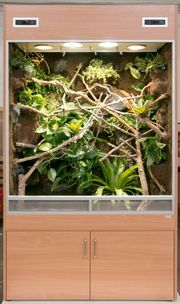 Terrarium Regenwald für ein Chamäleon