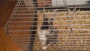 Kaninchen sucht neues