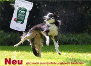 CBD Hundekekse - schmackhaft und vor