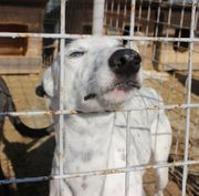 Spotty sucht windhunderfahrene Familie