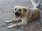 Niko-schüchtener Hundejunge sucht ein Zuhause
