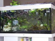 Aquarium Juwel 350 l mit