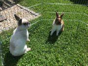 Besondere Kaninchen für besondere Menschen